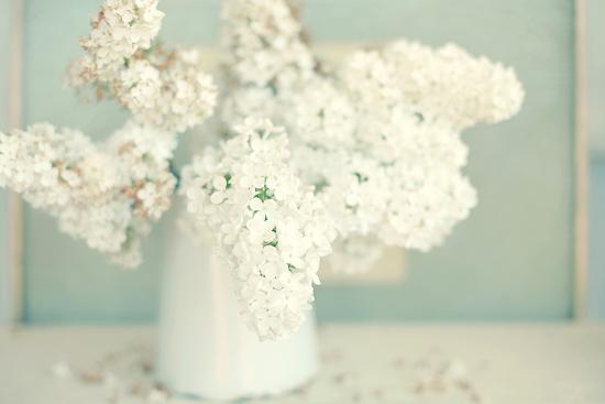 Gorgeous Whites-Sarah Gardner-Photographic Print