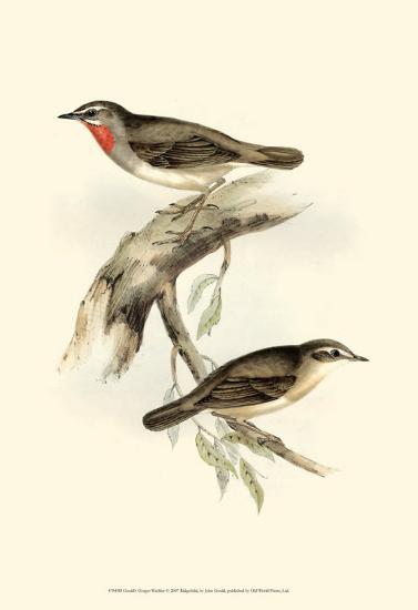 Gorget Warbler-John Gould-Art Print