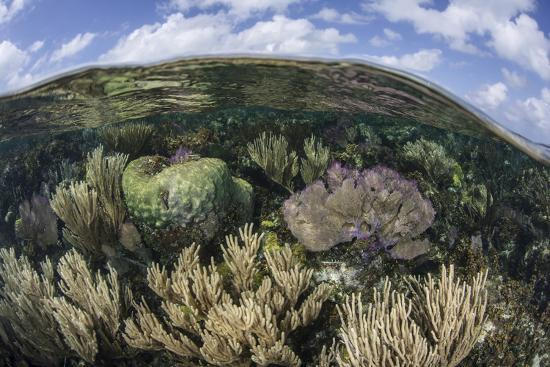 Gorgonians and Reef-Building Corals Near the Blue Hole in Belize-Stocktrek Images-Photographic Print
