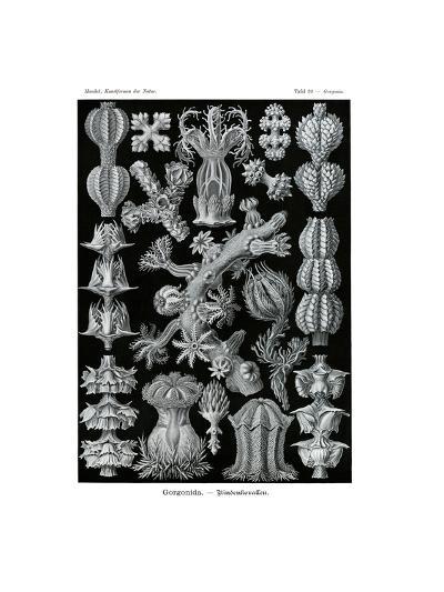 Gorgonida, 1899-1904--Giclee Print