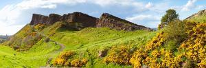 Gorse Bushes Growing on Arthur's Seat, Edinburgh, Scotland