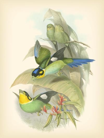 Gould Birds of the Tropics I-John Gould-Art Print