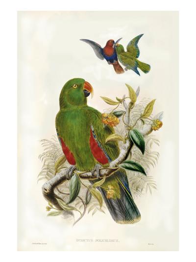 Gould Parrots I-John Gould-Art Print