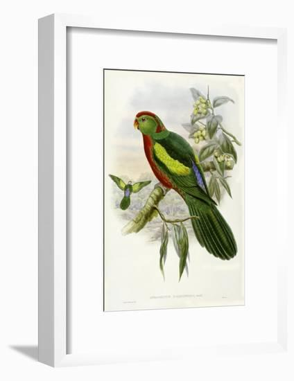 Gould Parrots II-John Gould-Framed Art Print