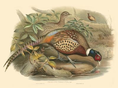 Gould Pheasants I-John Gould-Art Print
