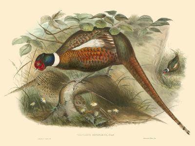 Gould Pheasants II-John Gould-Art Print
