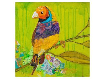 Gouldian Finch--Art Print
