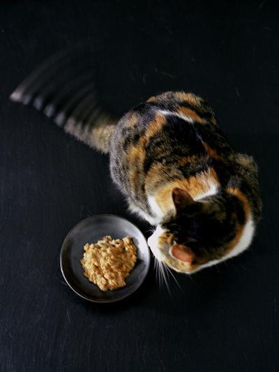 Gourmet - November 2005-Romulo Yanes-Premium Photographic Print