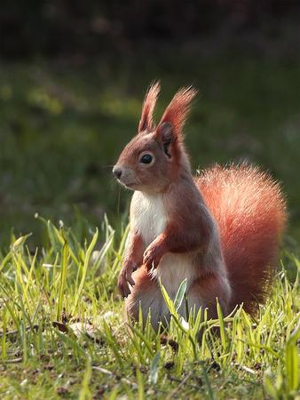 Cute Squirrel Mammal