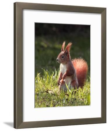 Cute Squirrel Mammal