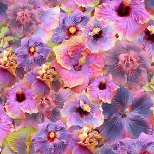 Hibiscus Tropical Floral Flowers by Grab My Art