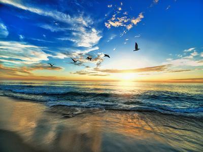 Seascape Sea Beach Birds Sundown