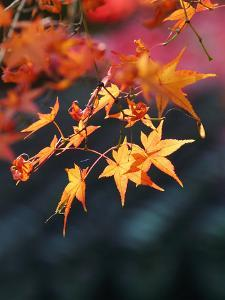 Season Autumn Fall Colorful Leafes 4 by Grab My Art