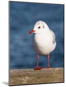 Seegull Gull Bird by Grab My Art