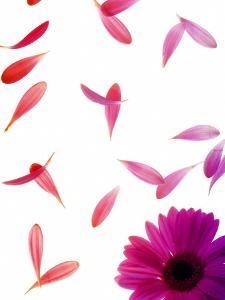 Single Pink Flower by Grab My Art