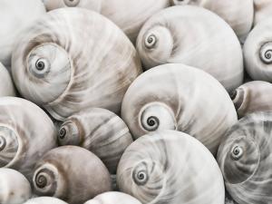 Snail Shells by Grab My Art