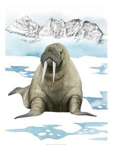 Arctic Animal III by Grace Popp