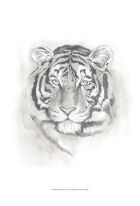 Big Cat Study II by Grace Popp