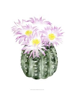 Cactus Bloom I by Grace Popp