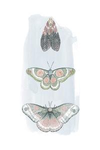 Jeweled Fairies I by Grace Popp