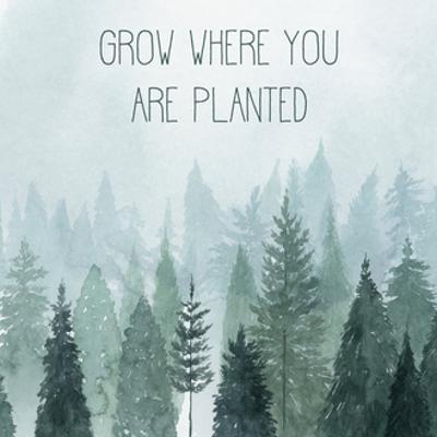 Little Grower II