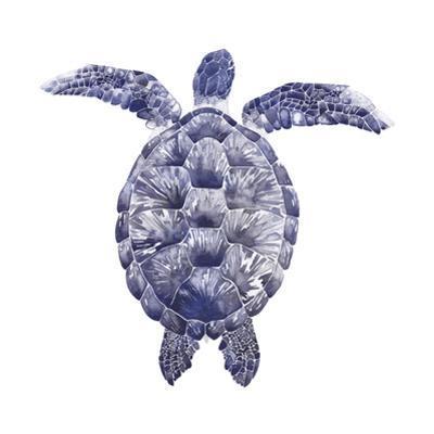 Marine Turtle I by Grace Popp