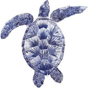 Marine Turtle II by Grace Popp