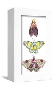 Moth Fairies I by Grace Popp