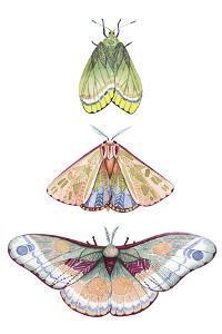 Moth Fairies II by Grace Popp