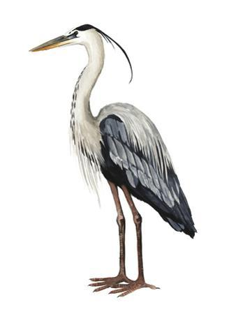 Sea Bird I