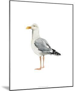 Sea Bird II by Grace Popp