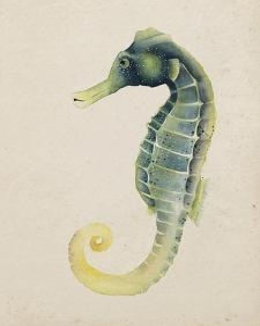Sea Dweller V by Grace Popp