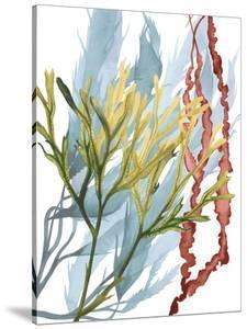 Seaweed Flow II by Grace Popp