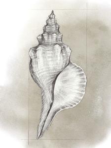 Shell Diagram I by Grace Popp
