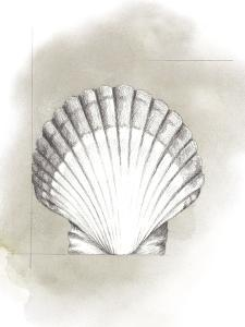 Shell Diagram II by Grace Popp
