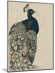 Textured Peacock I by Grace Popp