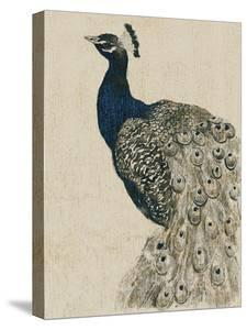 Textured Peacock II by Grace Popp