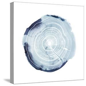 Tree Ring Overlay III by Grace Popp