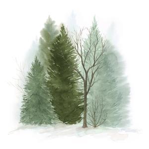 Walk in the Woods II by Grace Popp