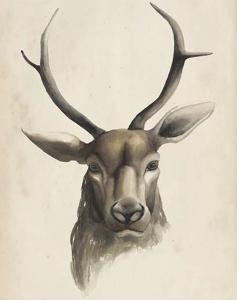 Watercolor Animal Study I by Grace Popp