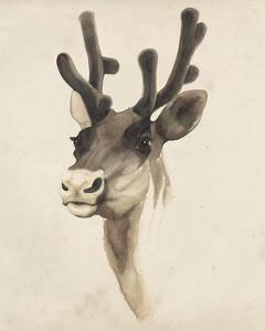 Watercolor Animal Study III by Grace Popp