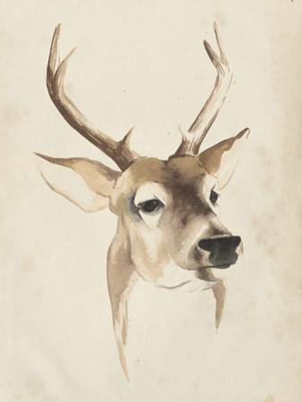 Watercolor Animal Study IV by Grace Popp