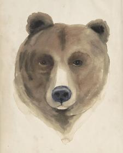 Watercolor Animal Study VI by Grace Popp