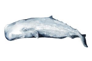 Whale Portrait II by Grace Popp