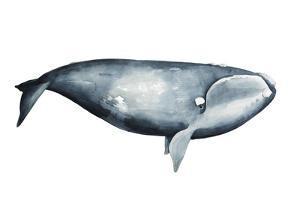 Whale Portrait III by Grace Popp