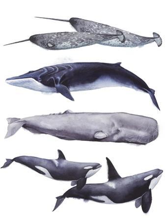 Whale Stack II by Grace Popp