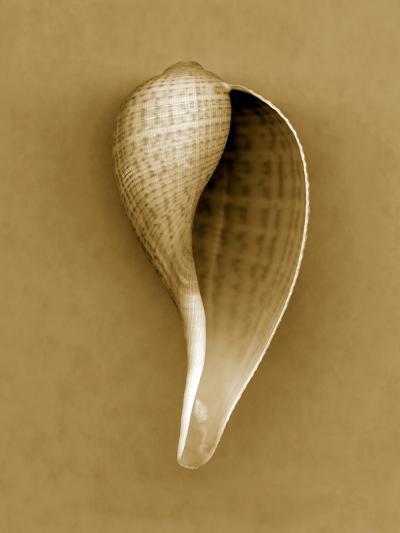 Graceful Fig Shell-John Kuss-Photographic Print