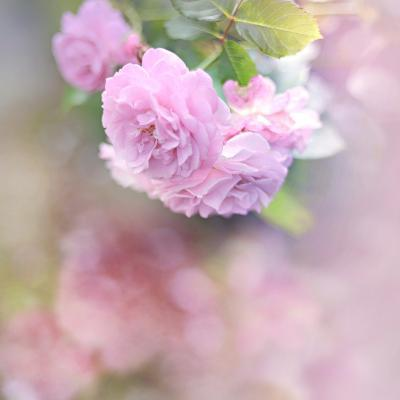 Graceful Floral-Sarah Gardner-Photographic Print