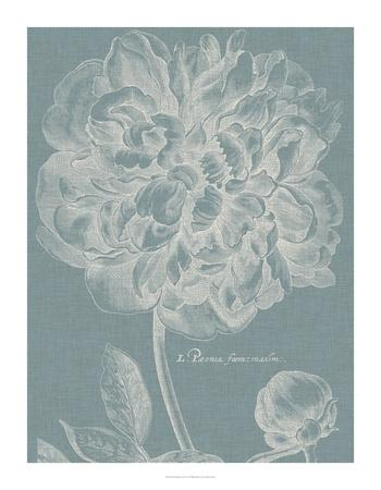 Graceful Peony I-Vision Studio-Giclee Print