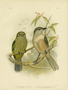 Catbird, 1891 by Gracius Broinowski